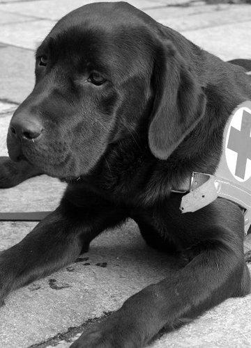 L'aiuto di un cane guida è unico