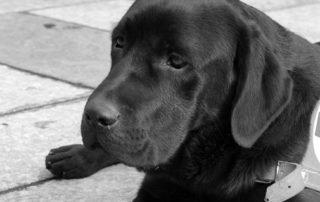 L'importanza di avere un cane guida
