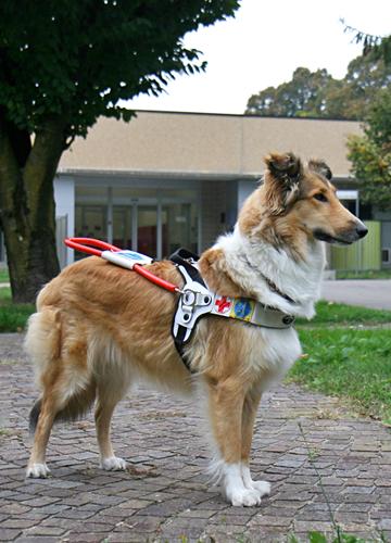 Cane guida addestrato dal Centro di Limbiate