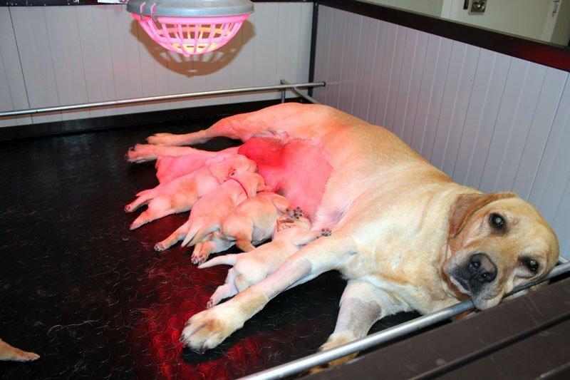 teneri cuccioli hoara